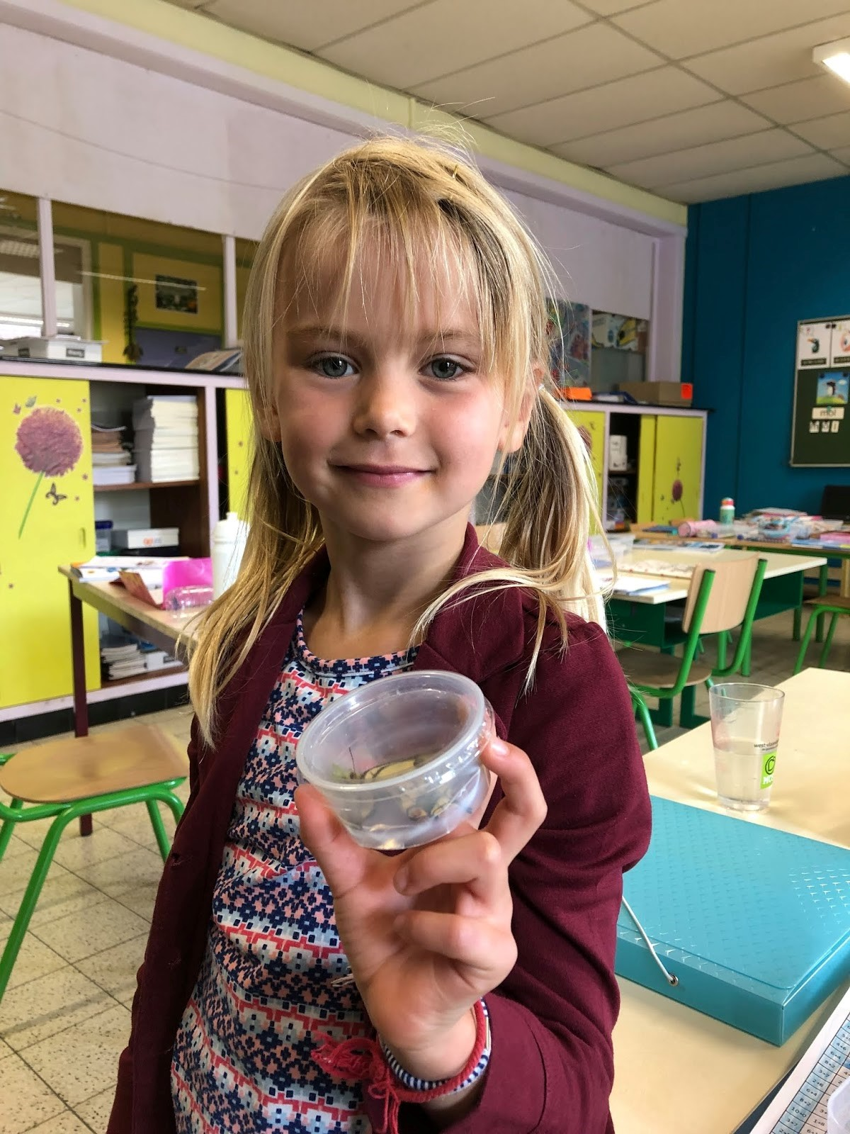 Project insecten